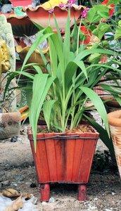 Bamboe Houten Bloembak uit Thailand  ,.